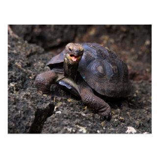 Tortuga gigante de las Islas Galápagos del bebé Postal