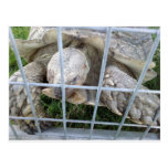 Tortuga gigante postales