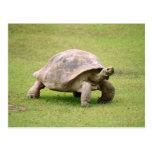 Tortuga gigante que camina en hierba postal