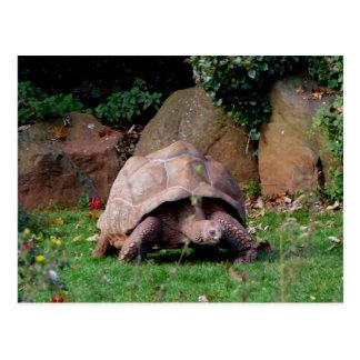 Tortuga gigante tarjeta postal