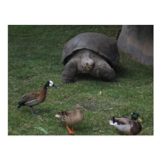 Tortuga gigante y patos postal