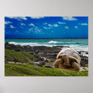 Tortuga grande en el borde del mar póster