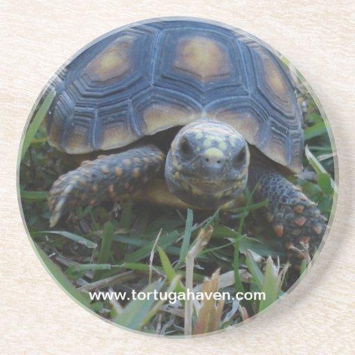 Tortuga Haven Coaster #1