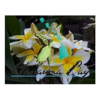 Tortuga Honu - flores de Hawaii del Plumeria Postal