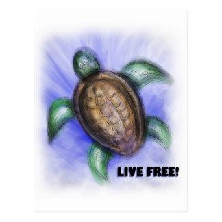 Tortuga libre viva tarjeta postal