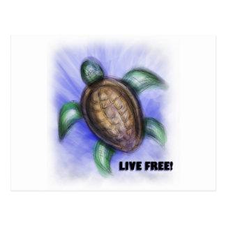 Tortuga libre viva tarjetas postales