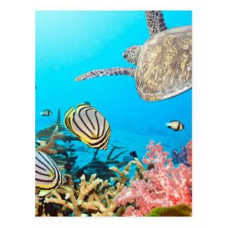 Tortuga Naturescape del arrecife de coral Tarjeta Postal