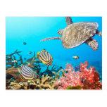 Tortuga Naturescape del arrecife de coral Tarjetas Postales