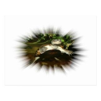 Tortuga Necked lateral africana en un marco de la Postales