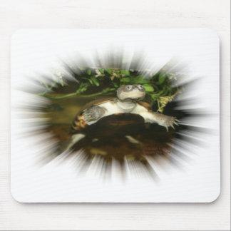 Tortuga Necked lateral africana en un marco de la Alfombrilla De Ratones