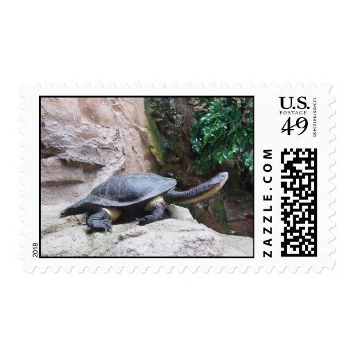 Tortuga negra con el cuello largo en las rocas sello