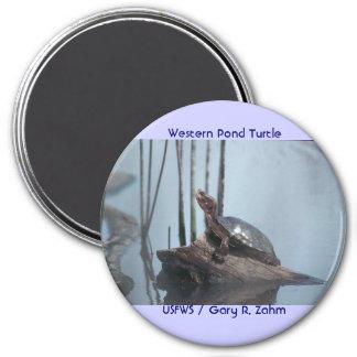 Tortuga occidental de la charca imán redondo 7 cm