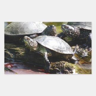 Tortuga Rectangular Pegatina
