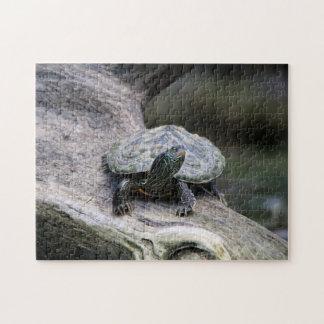 Tortuga pintada en una rama rompecabeza con fotos