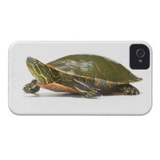 Tortuga pintada occidental (bellii del picta del C iPhone 4 Case-Mate Carcasa
