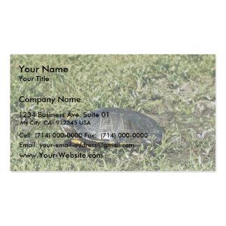 Tortuga pintada tarjetas de visita