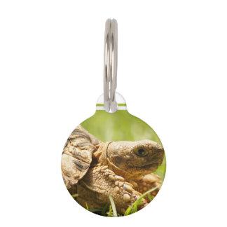 Tortuga Placas De Mascota