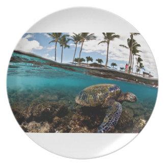 Tortuga que cruza las rocas de la playa platos