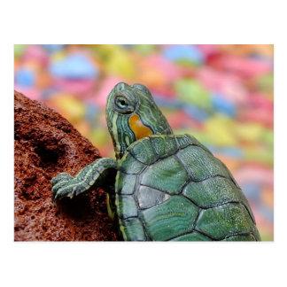 tortuga Rojo-espigada del resbalador Tarjetas Postales