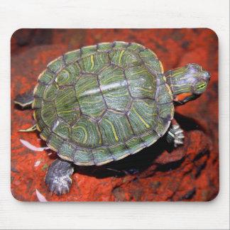 tortuga Rojo-espigada Tapetes De Ratones