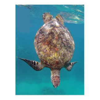 Tortuga Shell de Hawaii Postal