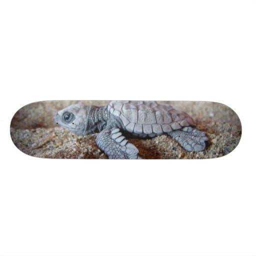 tortuga skateboards