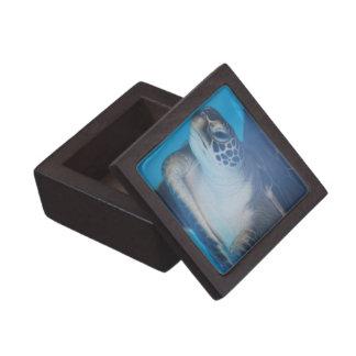 Tortuga subacuática cajas de regalo de calidad