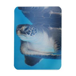 Tortuga subacuática imán rectangular