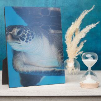 Tortuga subacuática placa de plastico