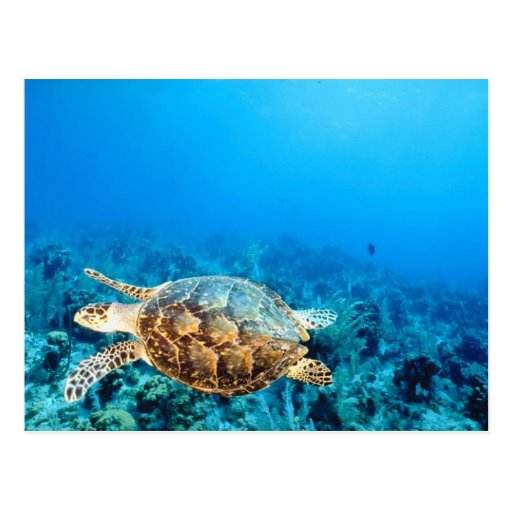 Tortuga submarina postales