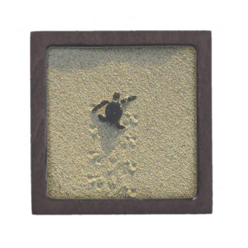 Tortuga verde, (mydas del Chelonia), hatchling Cajas De Joyas De Calidad