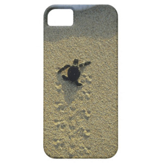 Tortuga verde, (mydas del Chelonia), hatchling iPhone 5 Coberturas