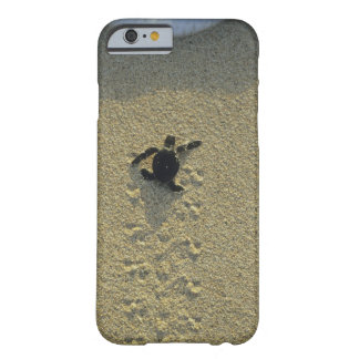 Tortuga verde, (mydas del Chelonia), hatchling Funda De iPhone 6 Barely There