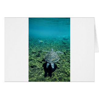 Tortuga verde Samoa Occidental subacuática Tarjetas