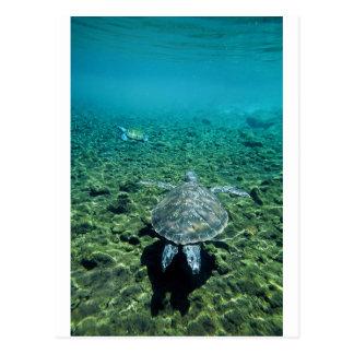 Tortuga verde Samoa Occidental subacuática Postal