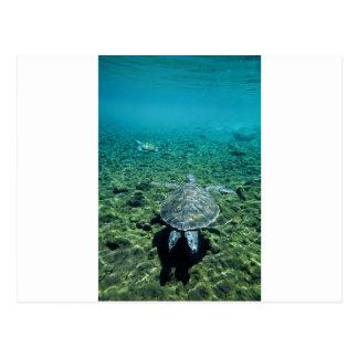 Tortuga verde Samoa Occidental subacuática Tarjeta Postal