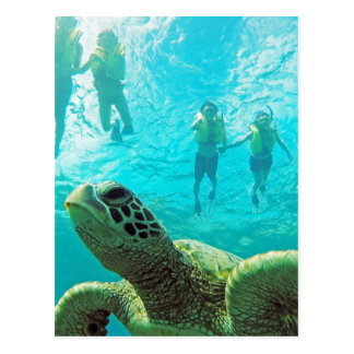 Tortuga y Snorkelers de Hawaii Tarjetas Postales
