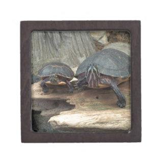Tortugas de Chillaxing Cajas De Regalo De Calidad