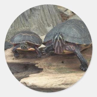 Tortugas de Chillaxing Pegatina Redonda