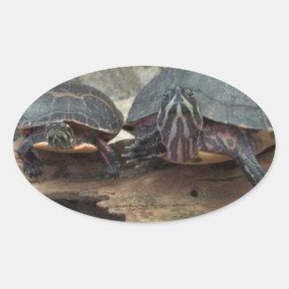Tortugas de Chillaxing Pegatina Ovalada