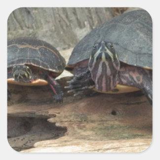 Tortugas de Chillaxing Pegatina Cuadrada