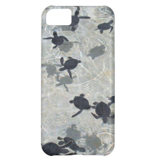 Tortugas de mar del bebé carcasa iPhone 5C