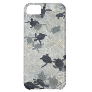 Tortugas de mar del bebé funda para iPhone 5C