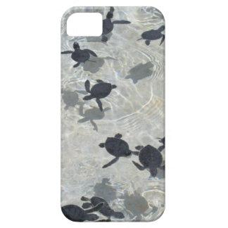 Tortugas de mar del bebé iPhone 5 cárcasas
