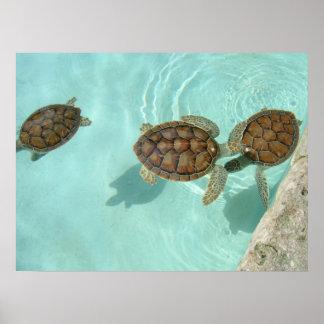 Tortugas de mar del bebé póster