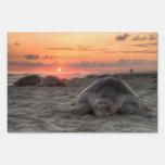 Tortugas de mar en la puesta del sol