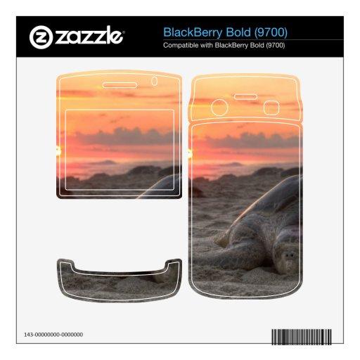 Tortugas de mar en la puesta del sol BlackBerry bold calcomanía