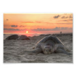 Tortugas de mar en la puesta del sol fotografias