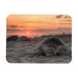 Tortugas de mar en la puesta del sol imanes rectangulares