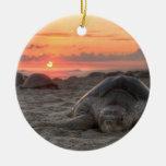 Tortugas de mar en la puesta del sol ornato